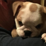 Weehawken family shares horror story of buying sick puppy from Lucky Pet Shop