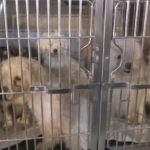 Union City officials rescue 31 dogs, 3 cats, after responding to water main break