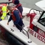 North Hudson firefighters, Weehawken officials, rescue deer from Hudson River