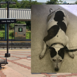 NJ Transit police rescue dog, reunite her with owner, after being stolen at Jersey City light rail stop