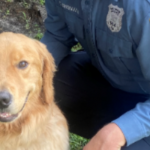 Secaucus police welcomes Oakley, their first therapy dog, to the department